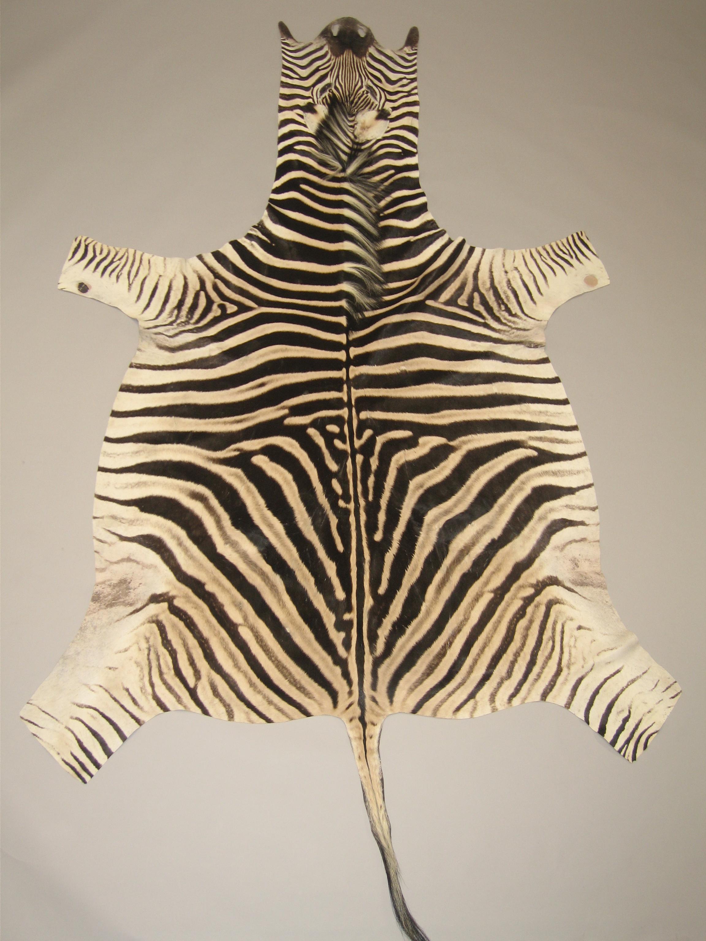 Zebrahuiden