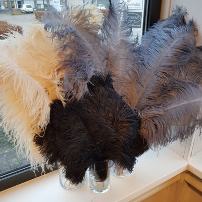 Struisvogel veren